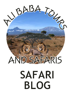 Alibaba Tours and Safari Blog